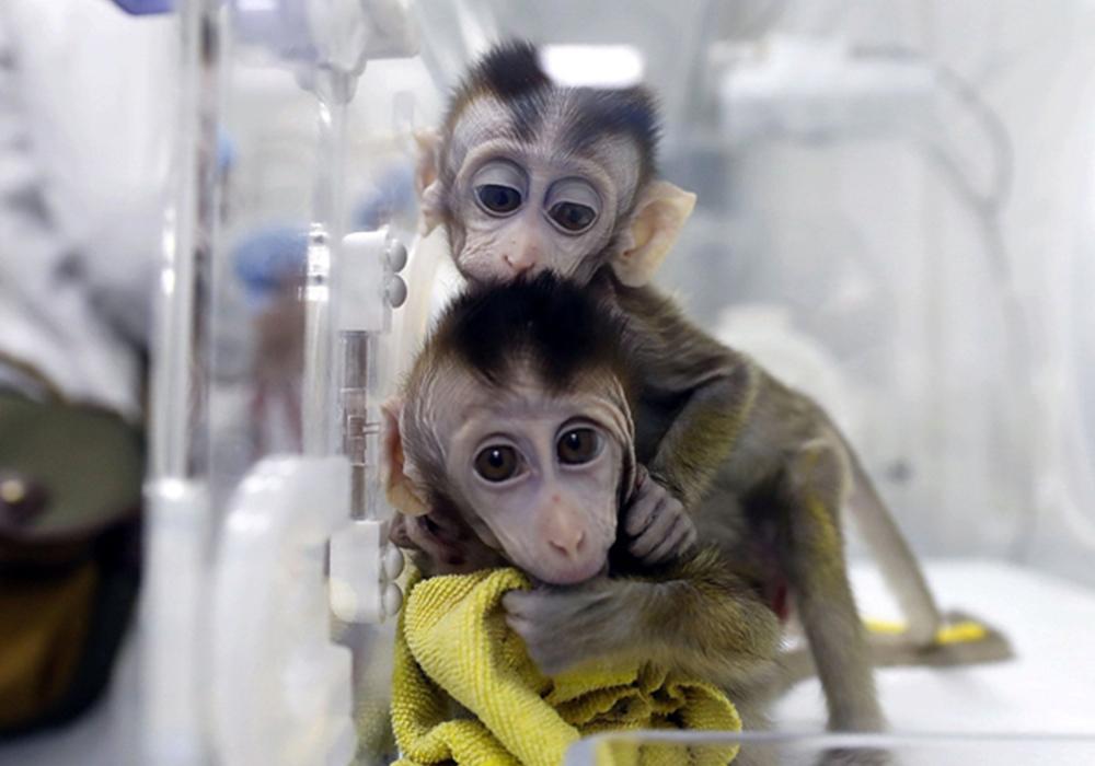 LEAL animalismo e antivivisezione