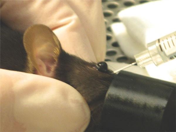 terrore e stress animali da laboratorio