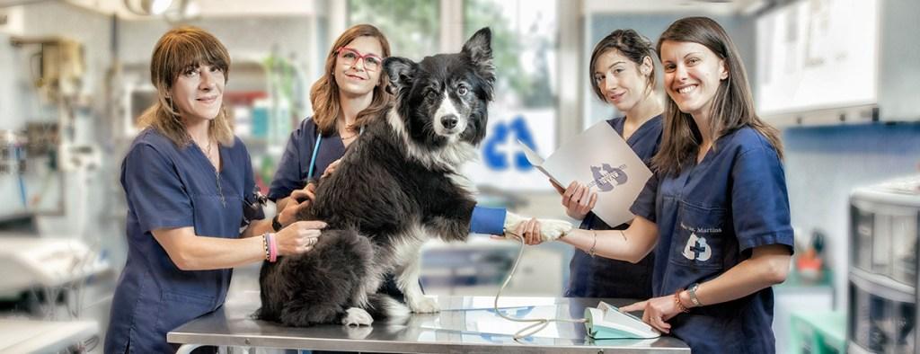 clinica veterinaria settale