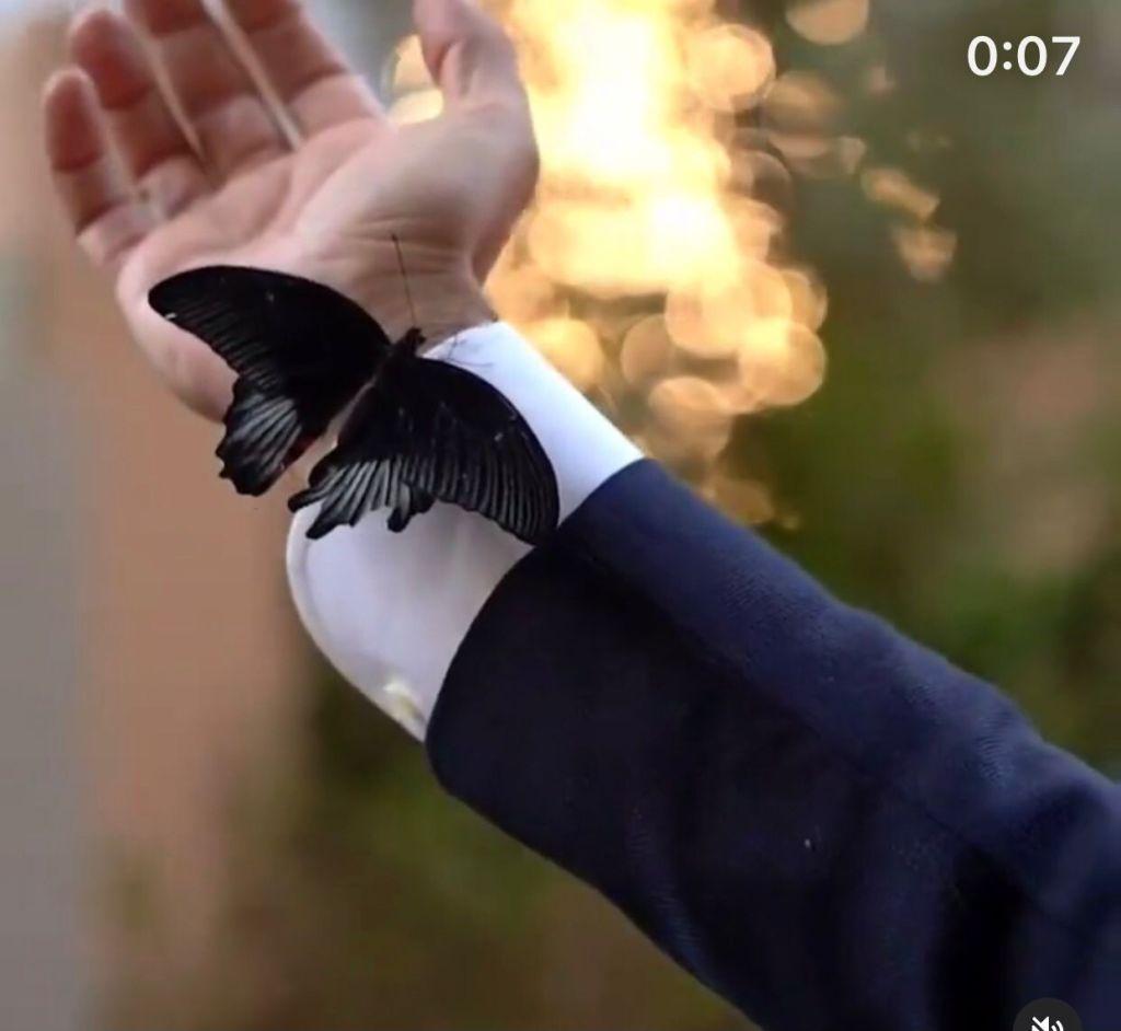 farfalle cadute morte