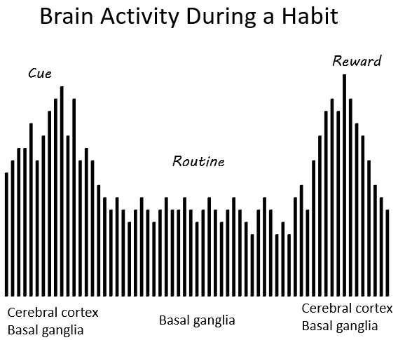 Brain Activity Habit Loop