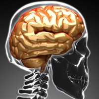 ONE BRAIN – BUT TWO MINDS