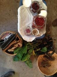 Botanical Medicine
