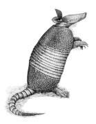Ilustração em nanquim sobre papel lavis Tecnique. recebeu o segundo lugar no concurso de Ilustração de Zoologia no Congresso brasileiro de Zoologia, 2006 e o primeiro lugar segundo o juri popular.