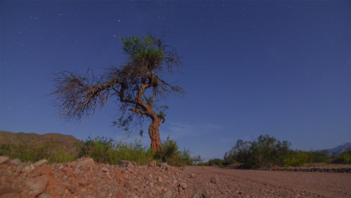 Polaris, Vía Láctea y árbol