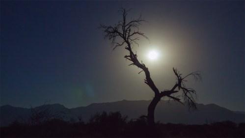 Luna y árbol