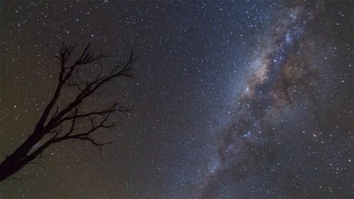 Árbol, Vía Láctea y Nube de Magallanes