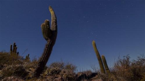 Cactus, Vía Láctea y polaris