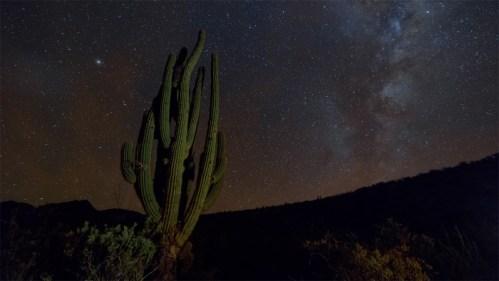 Cactus y Vía Láctea