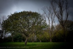 LeanneCole-melbourne-banyule-warringal parklands-20140614-1366