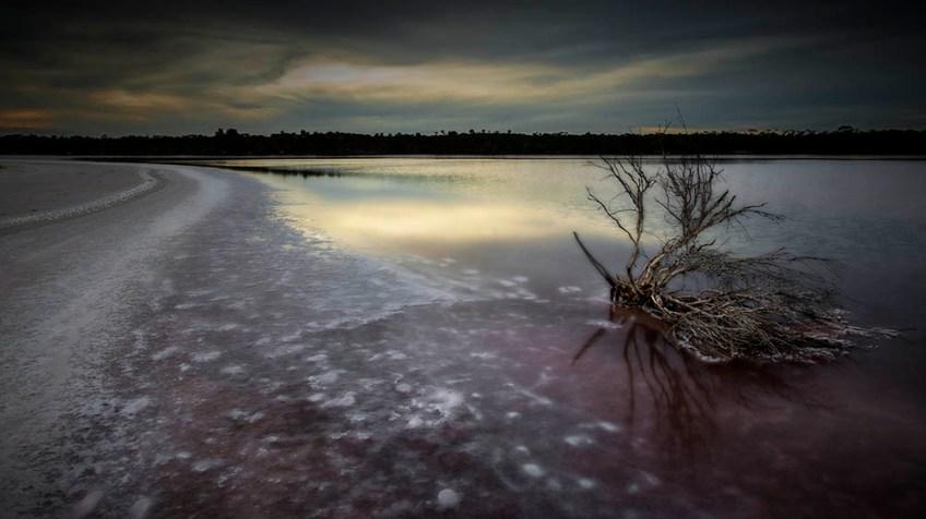 murraysunset-pinklades-salt-bush-water
