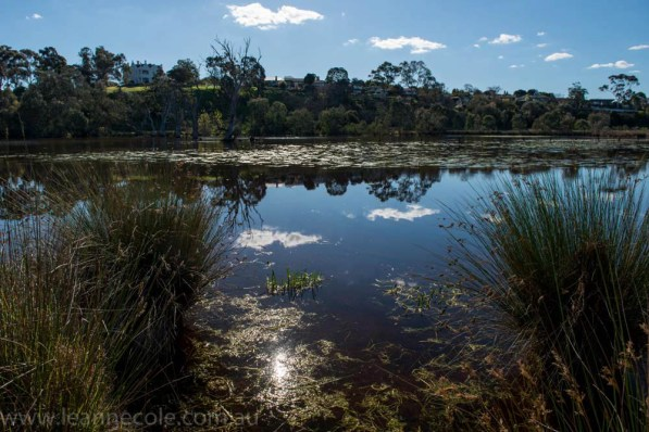 banyule-flats-social-snappers-sun-4