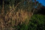 banyule-flats-social-snappers-sun-9