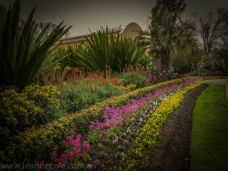 melbourne-fitzroy-gardens-conservatory-flowers-4