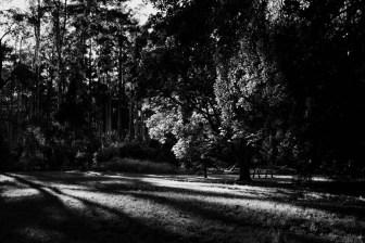 black-spur-rainforest-monochrome-078