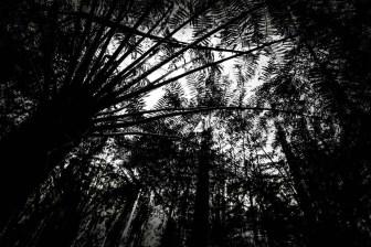 black-spur-rainforest-monochrome-080