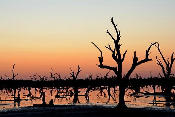 jo-sunset-trees-salt-lake