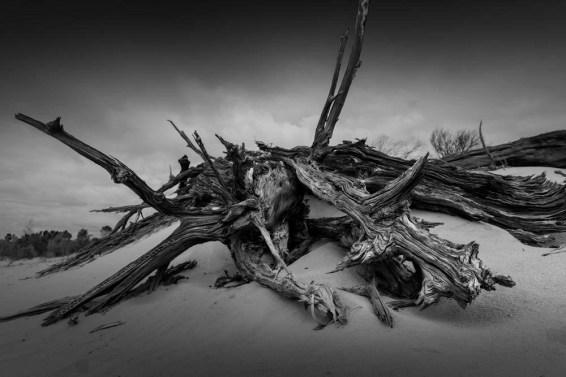 lake-albacutya-sand-dune-wood