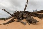 lakealbacutya-sand-dune-wood-original