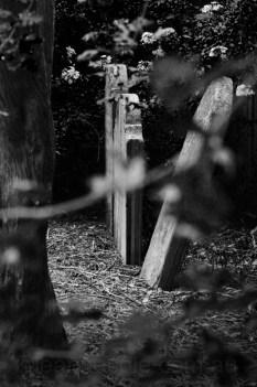 old-cemetery-grave-stones-heidelberg