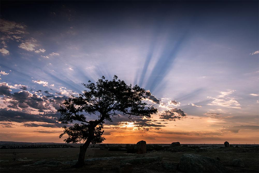 dog-rocks-tree-sun-rays