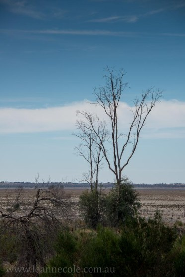 lake-albacutya-mallee-bush-victoria-1697