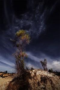 tree-sand-dune-lakealbacutya-victoria-colour