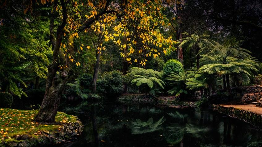 alfred-nicholas-gardens-lake-dandenong