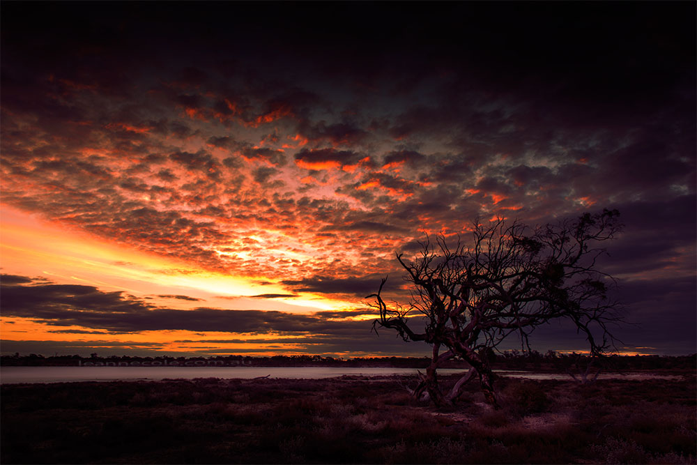 sunset-pinklakes-murraysunset-one-tree