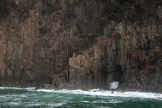 bruny-island-southcoast-cliffs-cruise-4393