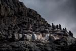 bruny-island-southcoast-cliffs-cruise-4704