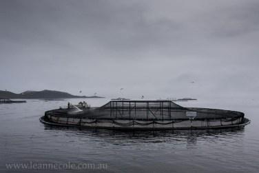 tasmania-strahan-worldheritage-gordon-river-3433