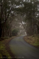 castlemaine-mountain-rocks-bushland-fog-7774