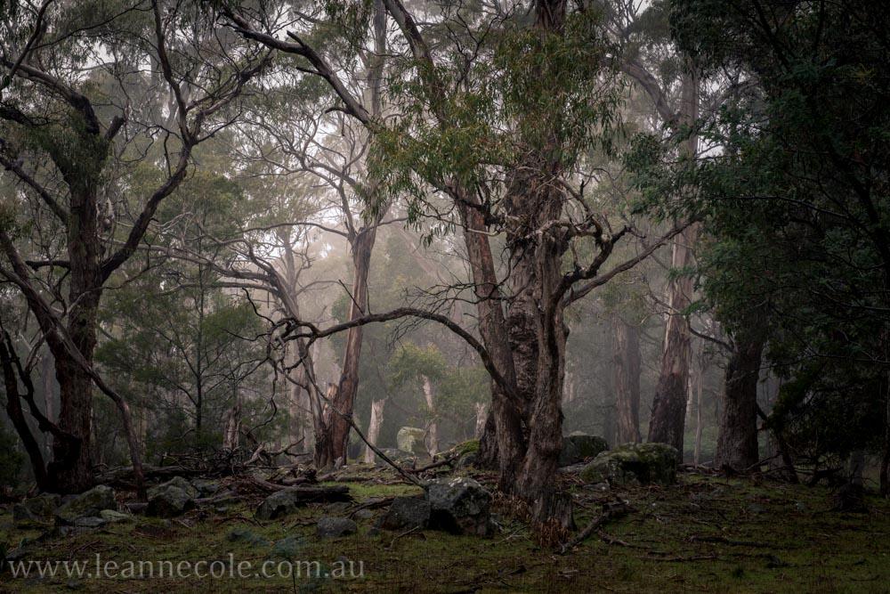 castlemaine-mountain-rocks-bushland-fog-7782