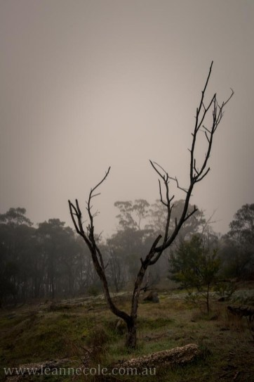 castlemaine-mountain-rocks-bushland-fog-7788