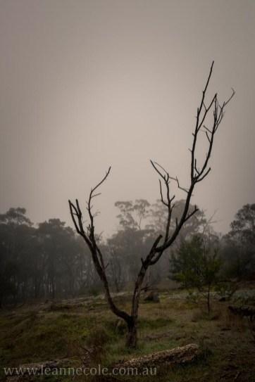 castlemaine-mountain-rocks-bushland-fog-7788