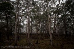 castlemaine-mountain-rocks-bushland-fog-7842