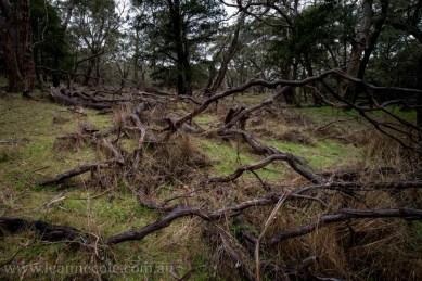 castlemaine-mountain-rocks-bushland-fog-8284