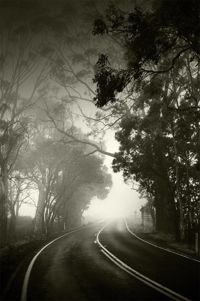 daylesford-road-fog-monochrome-victoria