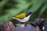 healesville-sanctuary-birds-australian-0260