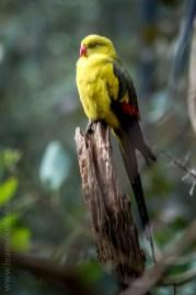 healesville-sanctuary-birds-australian-0953