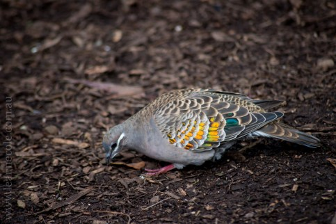 healesville-sanctuary-birds-australian-1022