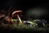 kinglake-national-park-mushroom-macro