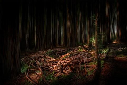 redwood-forest-nests-warburton-victoria