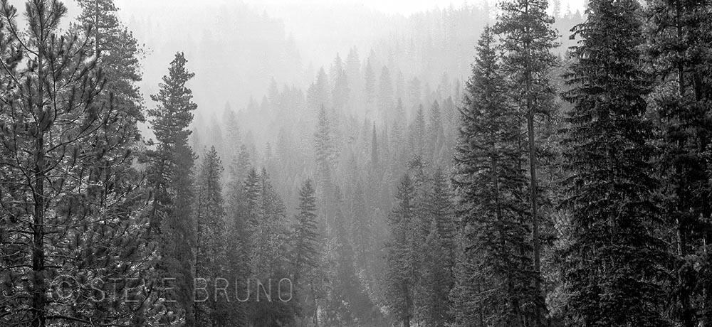 misty-forest-by-steve-bruno