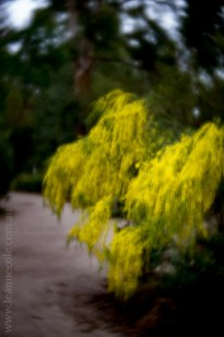 flora-healesville-sanctuary-lensbaby-velvet56-4599