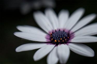 flower-garden-macro-lensbaby-sweet50