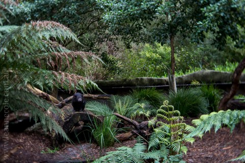 healesville-sanctuary-animals-lensbaby-velvet56-4991