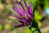 heide-banksia-park-landscape-flowers-107