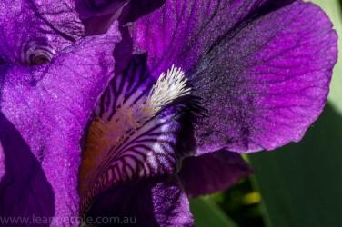 heide-banksia-park-landscape-flowers-109